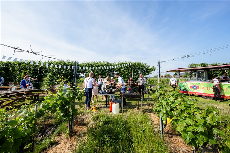 Buiten bruiloft in de wijngaard